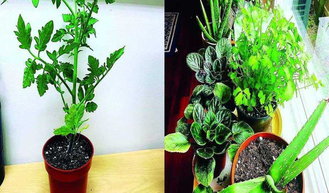 Care For Potted Plants In Monsoon