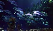 Sakshi: How Do Fish Sleep?