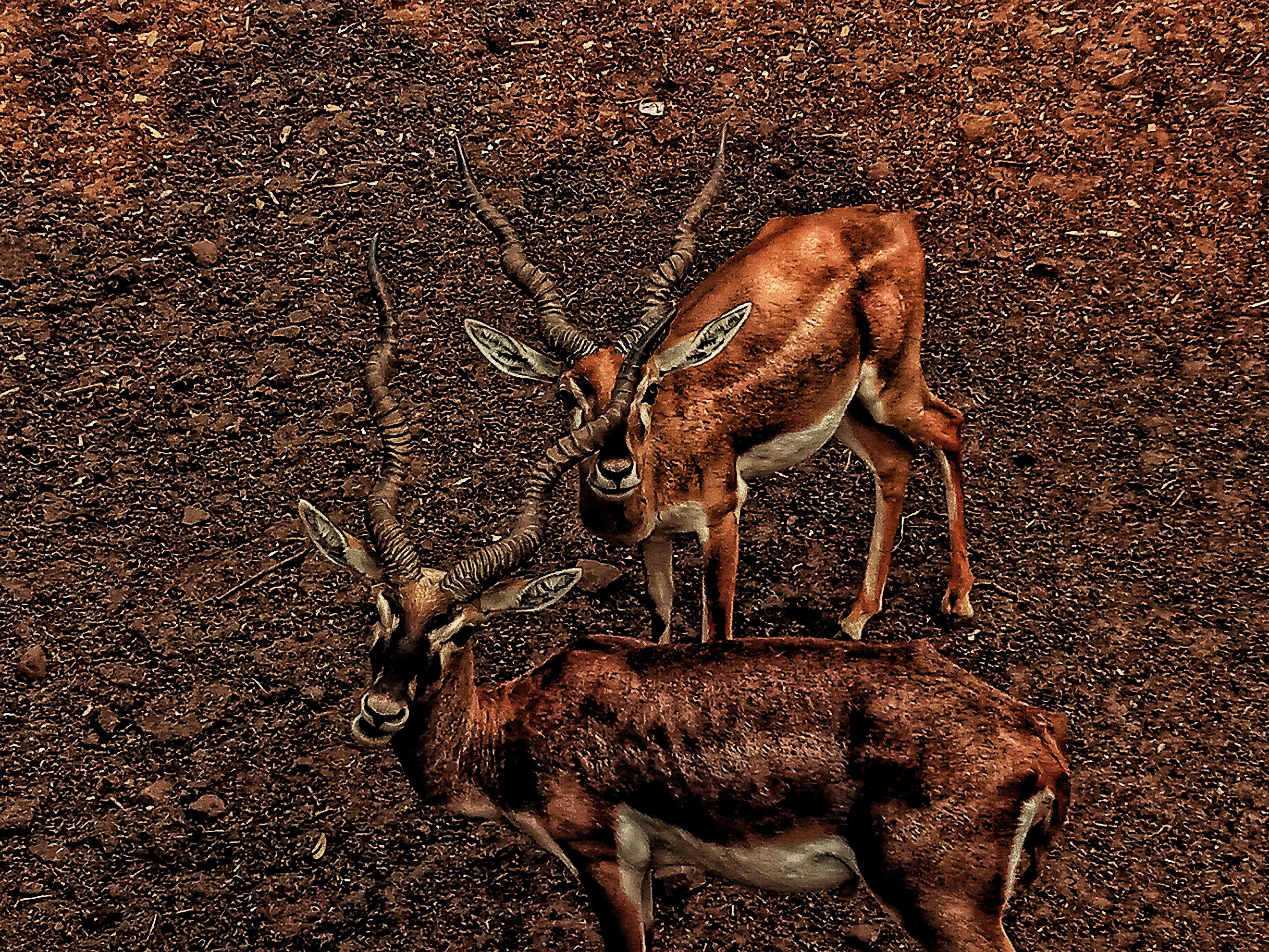 Prathamesh Captures Deers
