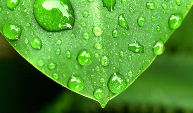 Take Care Of Potted Plants In Monsoon