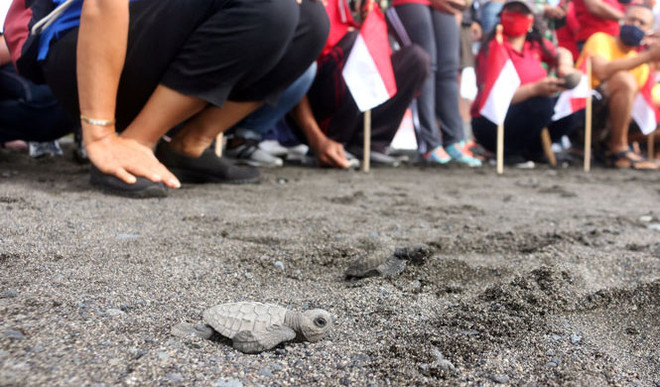 10,000 Baby Turtles Released Into Sea