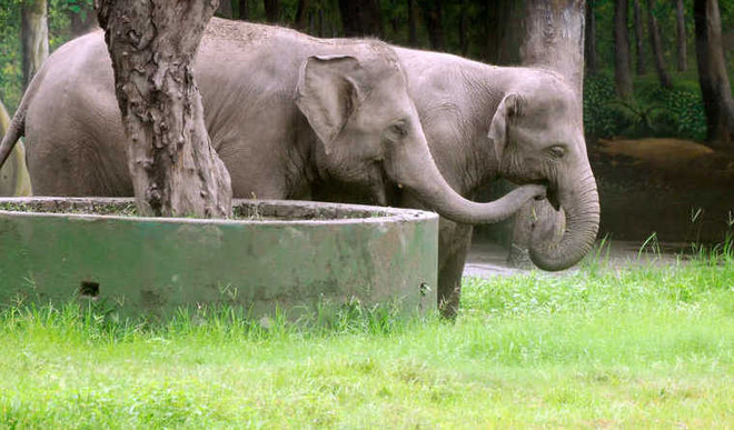 Hangout With Animals, Kolkata Zoo Is Online!