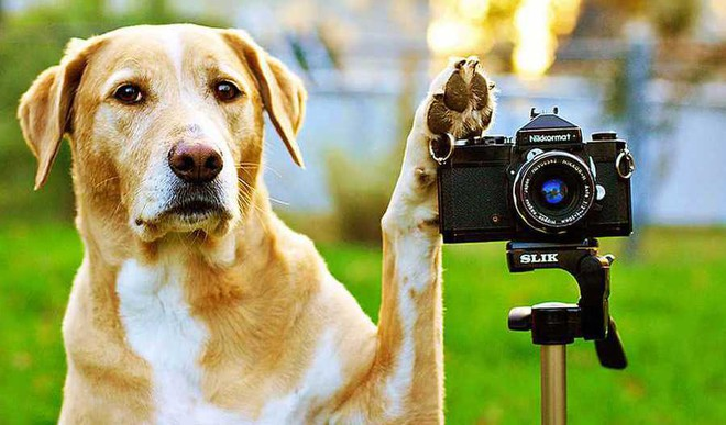Lights, Camera, Action: Pet Passions Winners