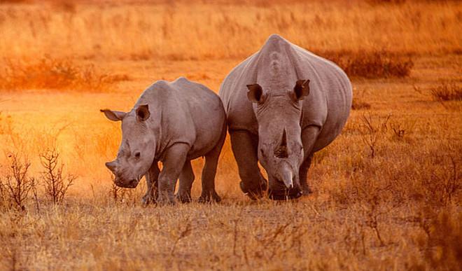 Prahelika: Is Wildlife Under Threat?