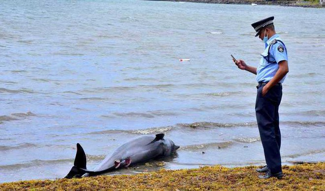 40 Dolphins Found Dead In Mauritius Oil Spill