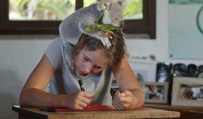 Meet 11-Yr-Old 'Koala Whisperer'