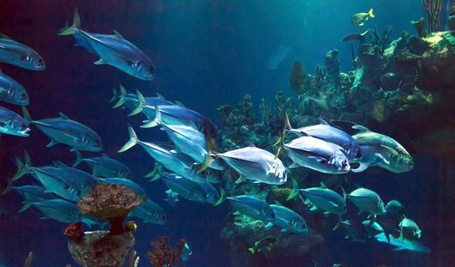 Noise Pollution Threatens Fish