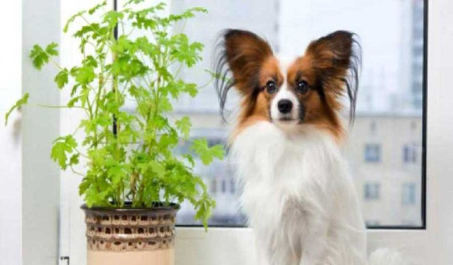 Your Guide To Pet Friendly Plants