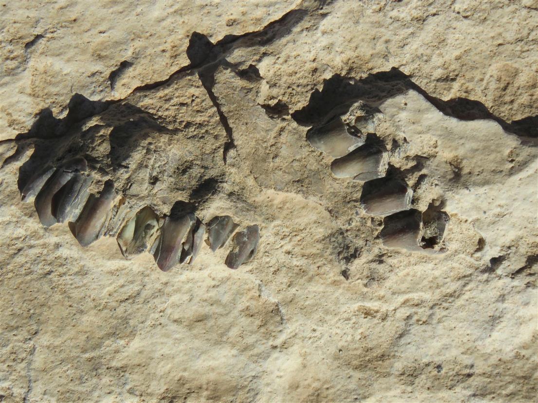 120,000-Yr-Old Human Footprints In S Arabia?