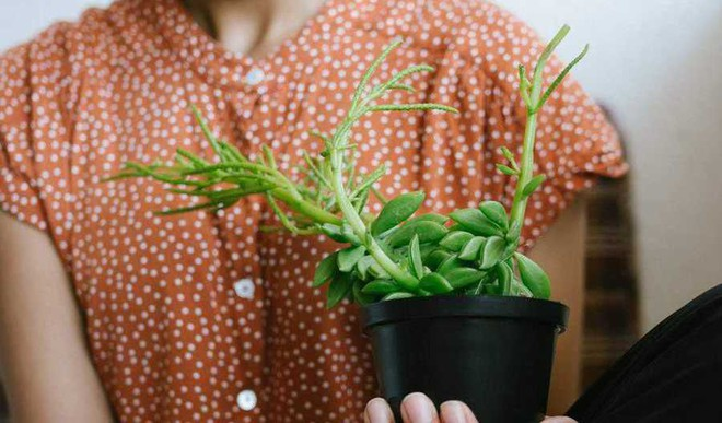 Tips For Greenery In Small Flat