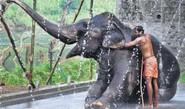 2700 Elephants To Get Aadhar Card