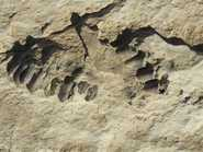 120,000-Yr-Old Human Footprints In S Arabia?