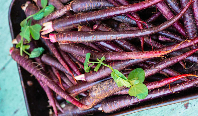 Eat Black Carrots To Stay Healthy