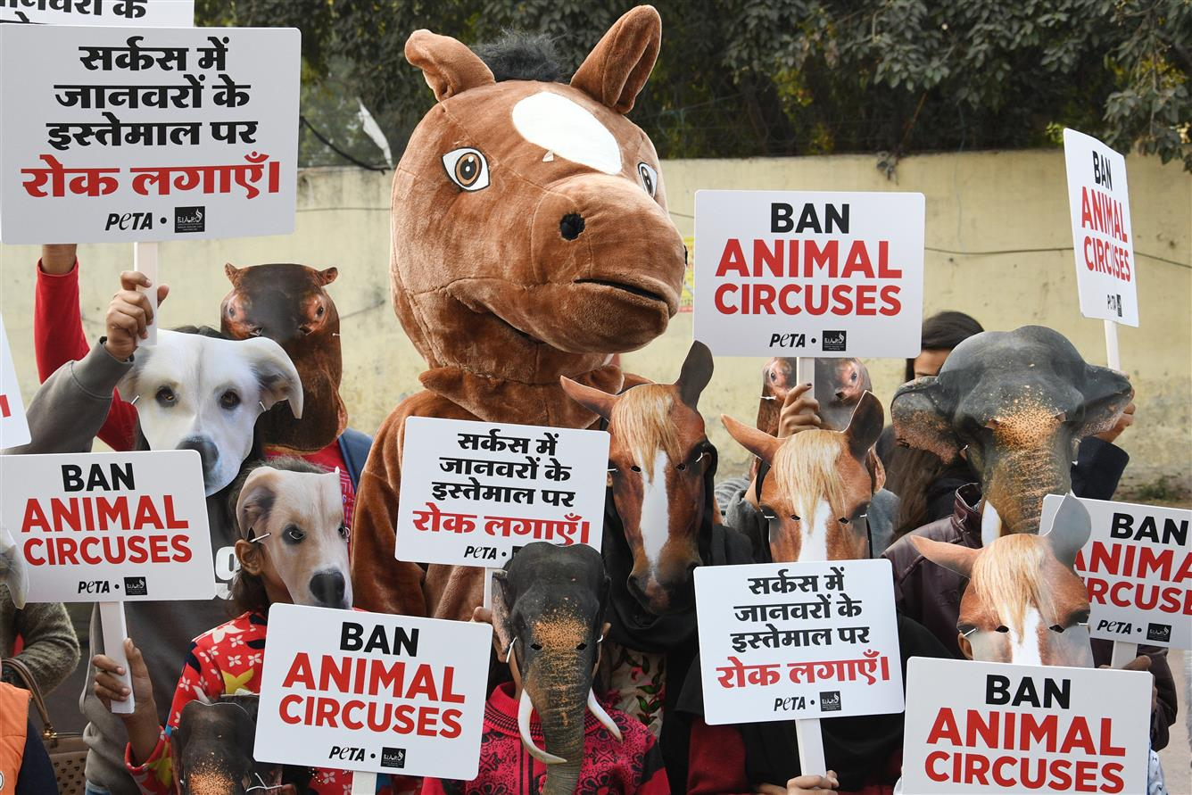 Ban Animals' Use In Circus: Schoolkids