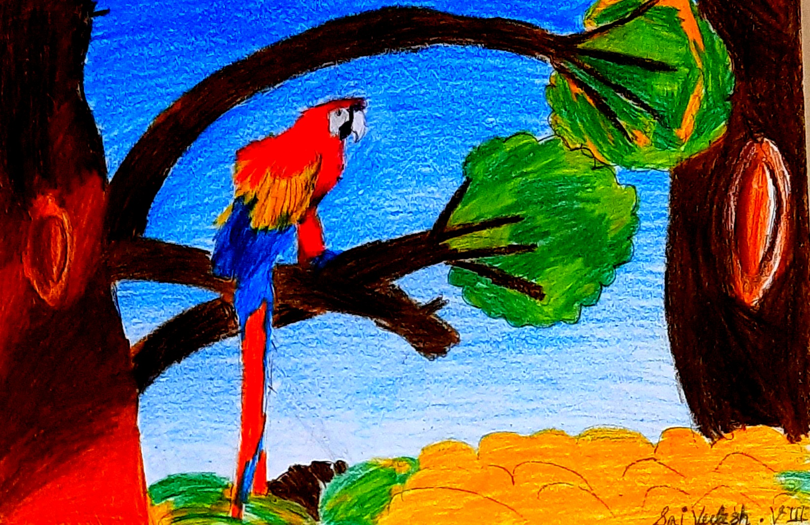 Saivedesh's Drawing Of A Macaw
