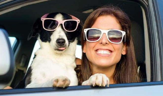Get Your Pet Picture-Ready