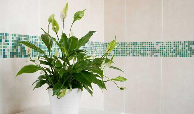 6 Houseplants For Your Bathroom
