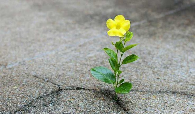 Nurture Undying Hope