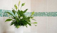 6 Houseplants For Your Bathroom