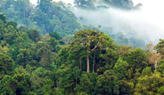 What Gave Rise To The Amazon Rainforest?