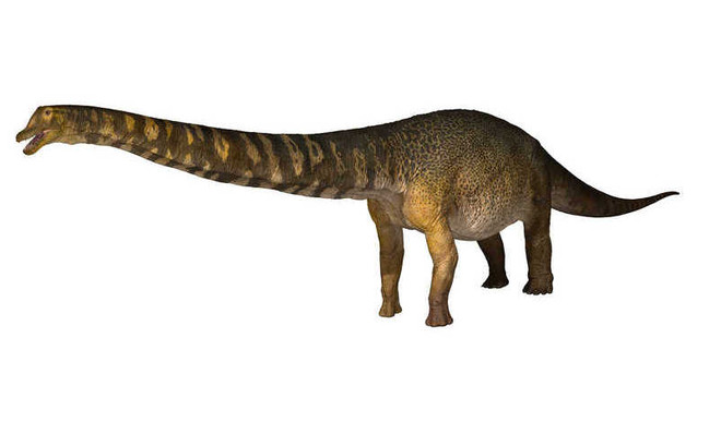 Australia's Largest Dino Identified!