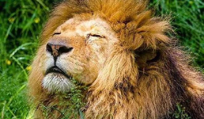 Covid-Hit Lankan Lion Needs India's Help