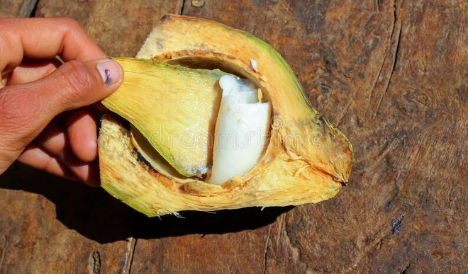 Eat Coconut Malai In Summer