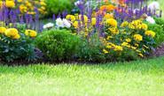 Maintain Your Garden
