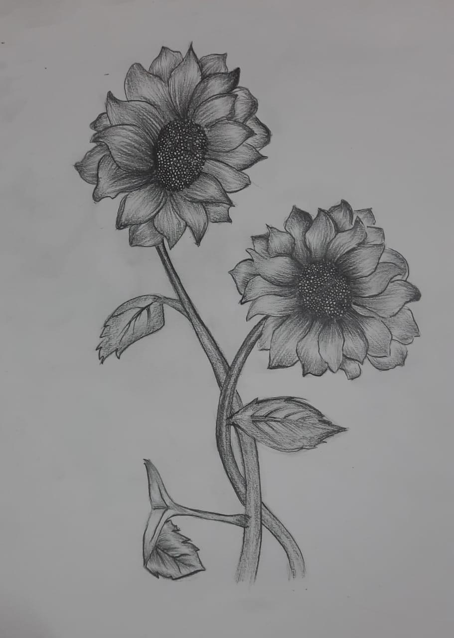 Kamakshi's Sunflower Sketch