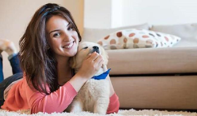 Create A Cosy Corner For Pets