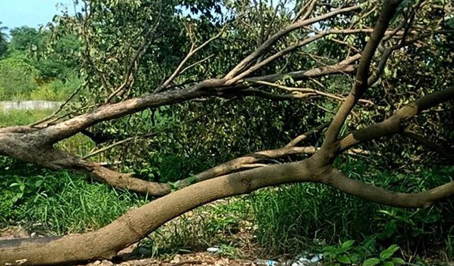 K'taka To Get A Green Budget To Protect Forests