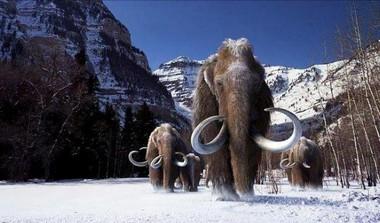Harvard Docs To Bring Woolly Mammoth Back To Life